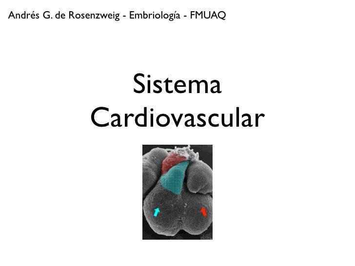 Andrés G. de Rosenzweig - Embriología - FMUAQ                        Sistema                 Cardiovascular