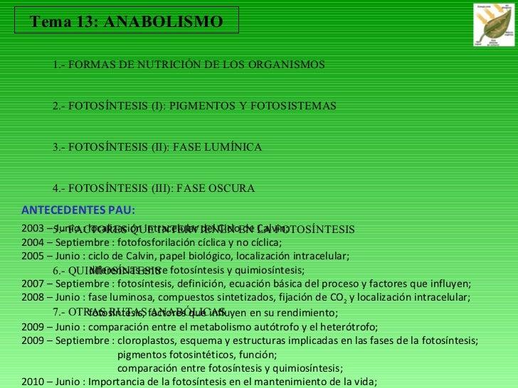 T13 anabolismo