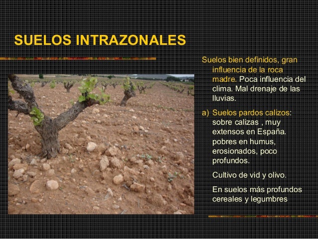 Edafolog a suelos for Formacion de los suelos