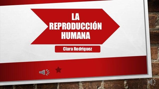 LA REPRODUCCIÓN HUMANA Clara Rodríguez