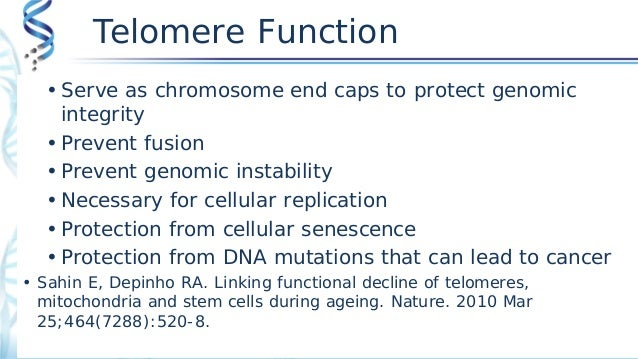 telomere length and telomerase activity in cancer Telomerase is a relatively specific cancer target as normal body cells express little or no telomerase for most of their lifespan and generally have longer telomeres than those in tumour cells.