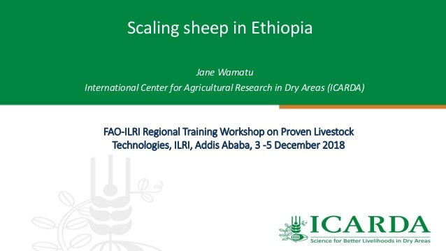 Scaling sheep in Ethiopia Jane Wamatu International Center for Agricultural Research in Dry Areas (ICARDA) FAO-ILRI Region...