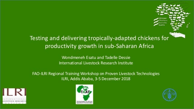Testing and delivering tropically-adapted chickens for productivity growth in sub-Saharan Africa Wondmeneh Esatu and Tadel...