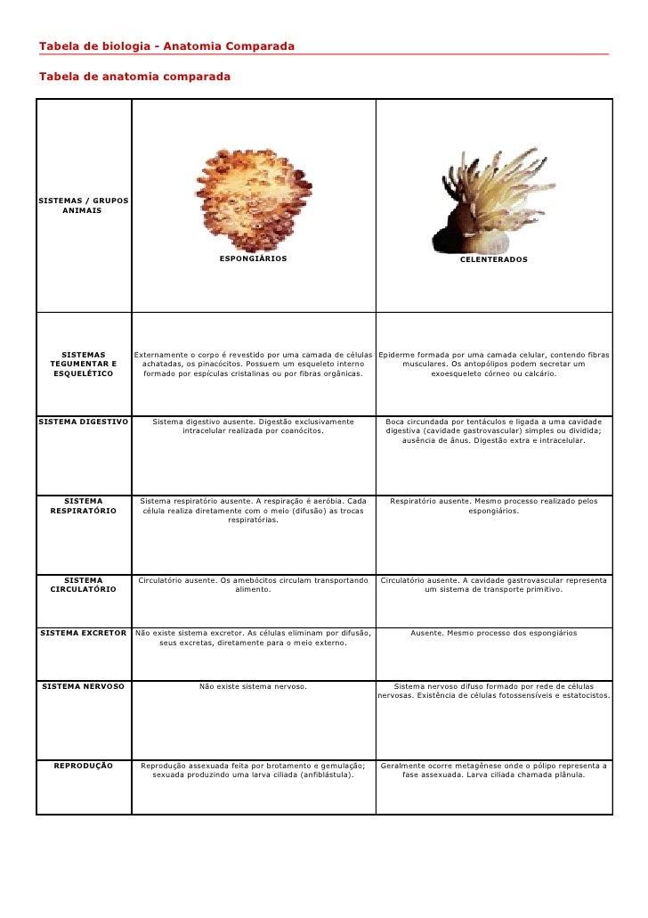 Tabela de biologia - Anatomia ComparadaTabela de anatomia comparadaSISTEMAS / GRUPOS     ANIMAIS                          ...