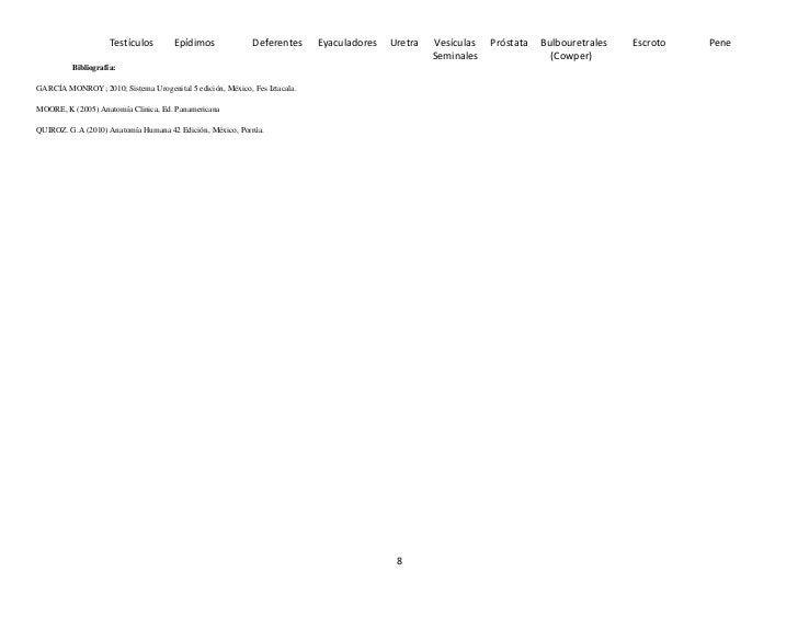 Testículos        Epídimos             Deferentes      Eyaculadores   Uretra   Vesículas   Próstata   Bulbouretrales   Esc...