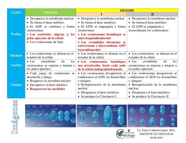 Cuadro Comparativo Entre Mitosis Y Meiosis Diferencias