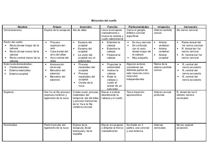 Tabla De Musculos[1] Slide 2