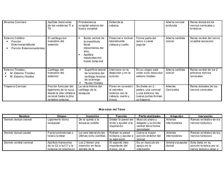 Tabla De Musculos[1] Slide 3
