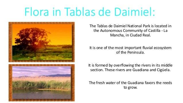 Flora in Tablas de Daimiel: The Tablas de Daimiel National Park is located in the Autonomous Community of Castilla - La Ma...