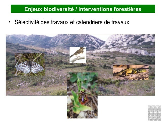 Enjeux biodiversité / interventions forestières • Sélectivité des travaux et calendriers de travaux