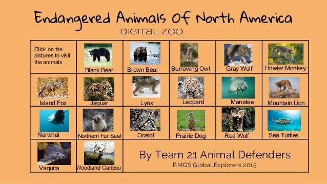 Endangered Animals of North America: Digital Zoo