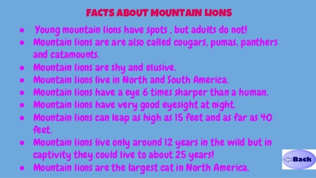 Kid Facts About Mountain Lions