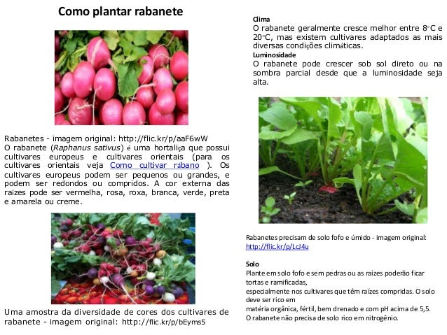 Como plantar rabanete Rabanetes - imagem original: http://flic.kr/p/aaF6wW O rabanete (Raphanus sativus) é uma hortaliça q...