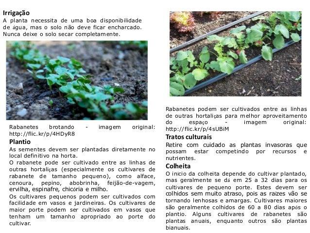 Irrigação A planta necessita de uma boa disponibilidade de água, mas o solo não deve ficar encharcado. Nunca deixe o solo ...