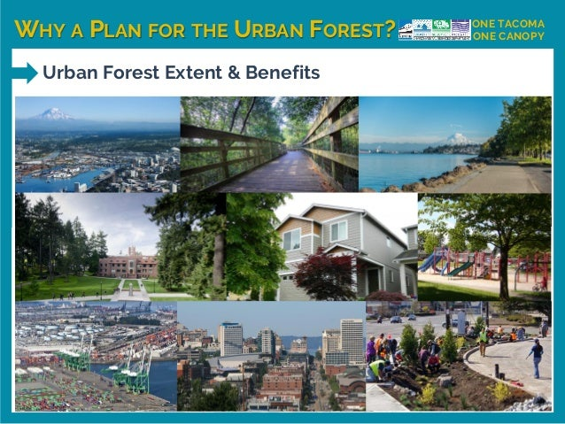 WHY A PLAN FOR THE URBAN FOREST? ONE TACOMA ONE CANOPY Urban Forest Extent & Benefits