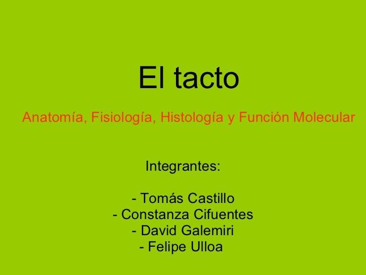 El tacto <ul><li>Integrantes: </li></ul><ul><li>- Tomás Castillo </li></ul><ul><li>Constanza Cifuentes </li></ul><ul><li>D...