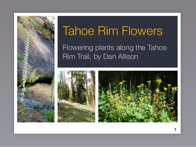 Tahoe Rim Flowers Flowering plants along the Tahoe Rim Trail, by Dan Allison 1