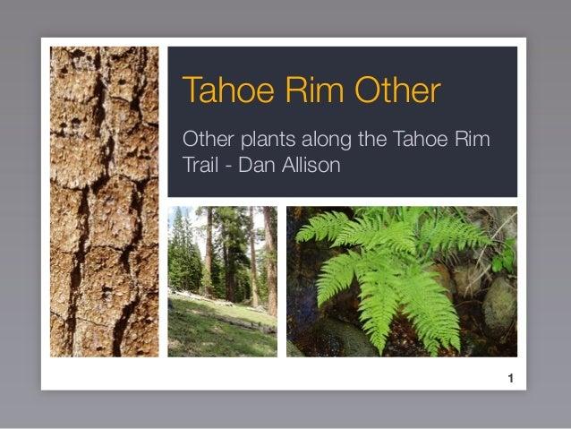 Tahoe Rim Other Other plants along the Tahoe Rim Trail - Dan Allison 1