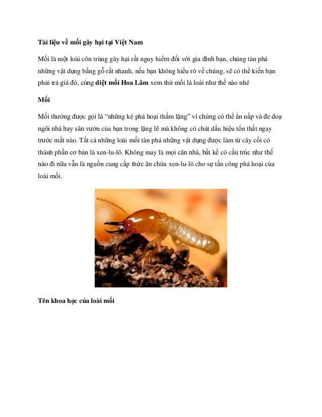 Tài liệu về mối gây hại tại Việt Nam Mối là một loài côn trùng gây hại rất nguy hiểm đối với gia đình bạn, chúng tàn phá n...
