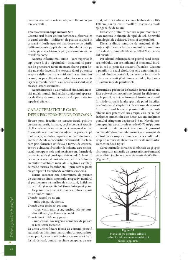 Taierea pomilor fructiferi  9  cresterea de noi ramuri de structura. Formarea  puternica a lastarilor lacomi indica taieri...