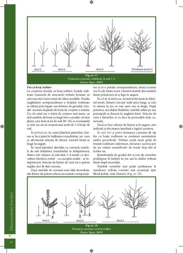 Taierea pomilor fructiferi  13  Coacazul si agrisul trebuie taiai pâna la 3-4  muguri, în timp ce zmeurul si murul la 5-10...