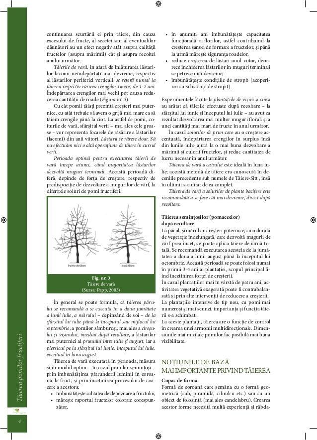 Taierea pomilor fructiferi  3  re al sanataii plantei, este recomandata efectuarea  acestor activitai la sfârsitul verii, ...