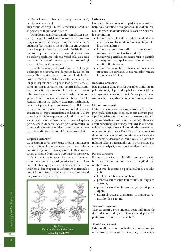 Taierea pomilor fructiferi  5  re. De aceea în trecut aceasta metoda de taiere era  privita ca arta cultivarii.  Taierea d...