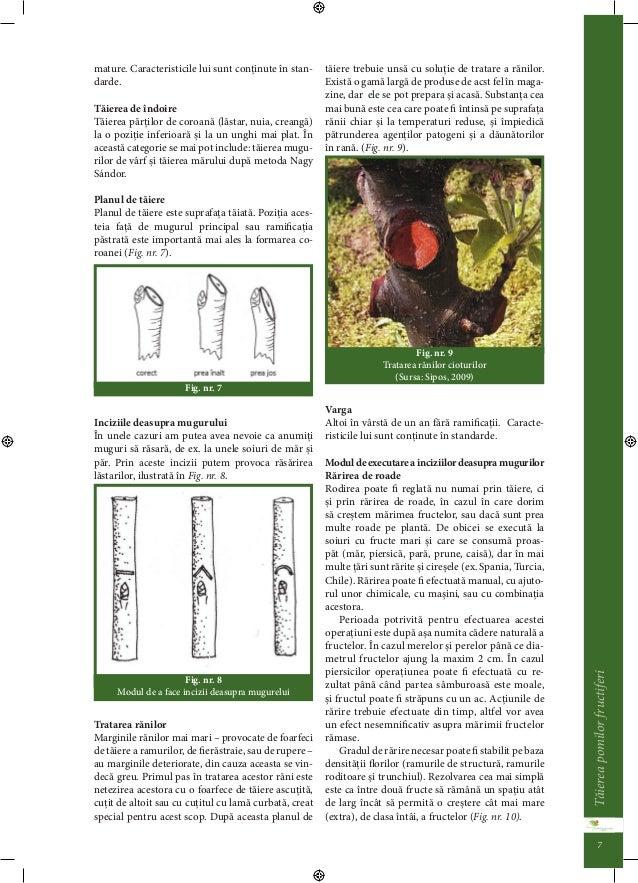 Taierea pomilor fructiferi 6  • lastarii crescui abrupt din crengi de structura,  • lastarii concureni.  Depinzând de scop...