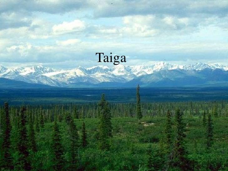 Taiga<br />