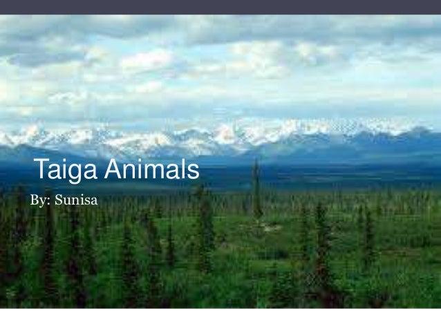Taiga AnimalsBy: Sunisa