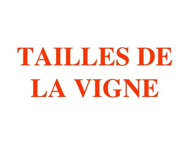 TAILLES DE  LA VIGNE
