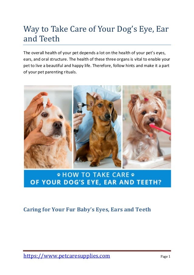 Way To Take Care Of Your Dog S Eye Ear And Teeth