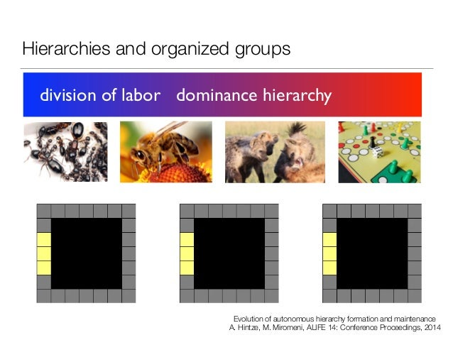 Hierarchies and organized groups division of labor dominance hierarchy Evolution of autonomous hierarchy formation and mai...