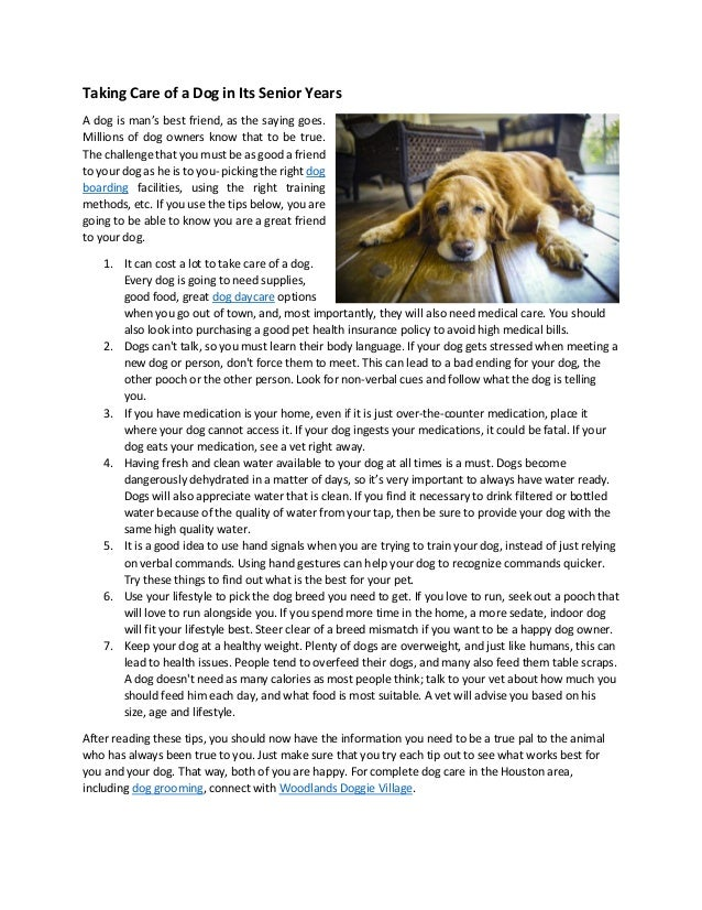 Taking Care of a Dog in Its Senior Years A dog is man's best friend, as the saying goes. Millions of dog owners know that ...