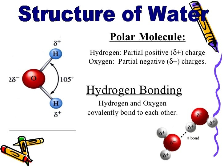 Ppt water is the solvent of life. Powerpoint presentation id.