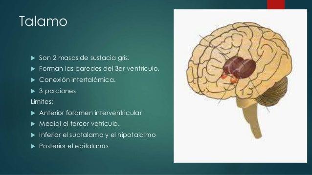 Hemisferios cerebrales funciones yahoo dating