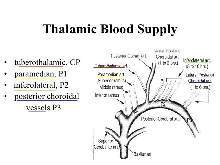 BLOOD SUPPLY OF THALAMIC DOWNLOAD