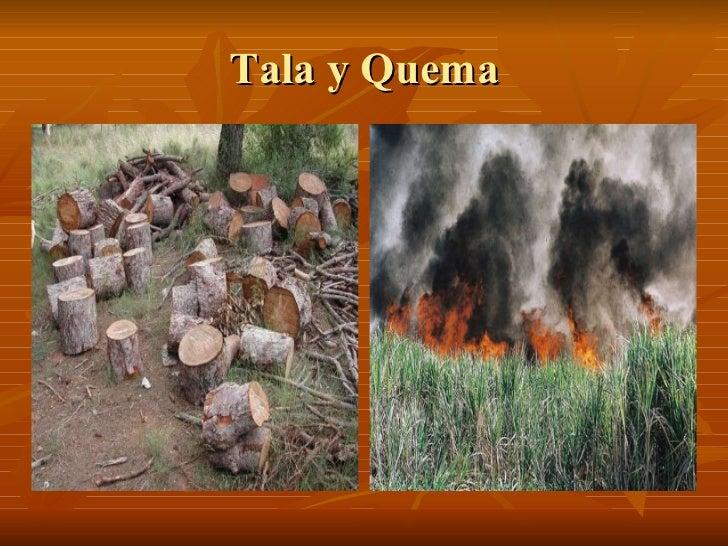 Tala y Quema