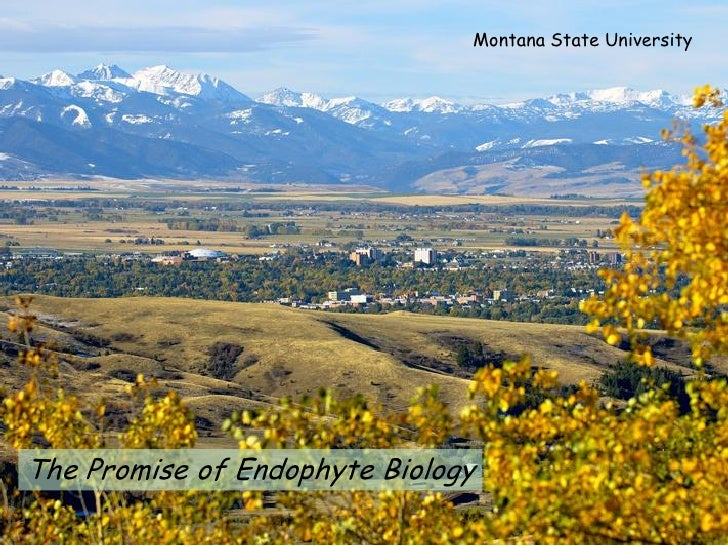 Montana State University     The Promise of Endophyte Biology