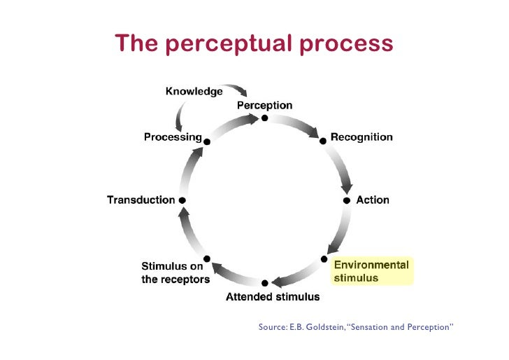 the function and process of perception Perception is the process of selecting, organizing, and interpreting information this process affects our communication because we respond to stimuli differently, whether they are objects or persons, based on how we perceive them.