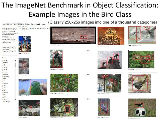 The ImageNet Benchmark in Object Classification: Example Images in the Bird Class 67 (Classify 256x256 images into one of ...