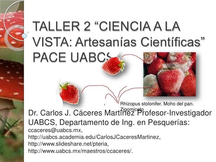 "TALLER 2 ""CIENCIA A LA VISTA: Artesanías Científicas"" PACE UABCS<br />Rhizopusstolonifer. Moho del pan. Zigomiceto<br />Dr..."