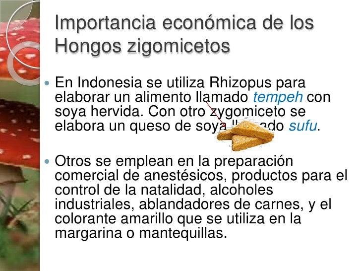 Mira por qu no debes comer pan de un paquete con moho - Lejia para los hongos ...
