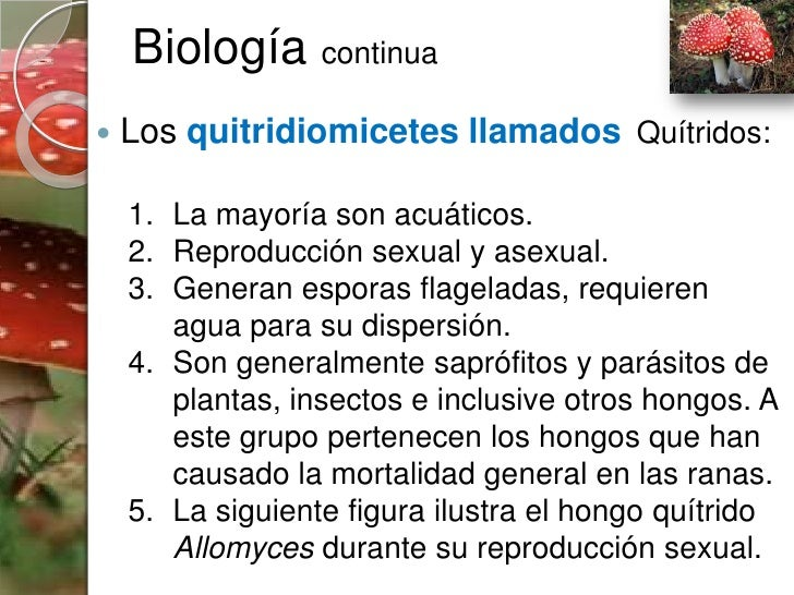Hongos imperfectos deuteromycetes asexual reproduction