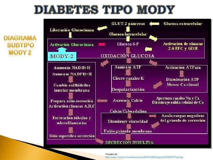DIABETES TIPO MODY TALLER 4