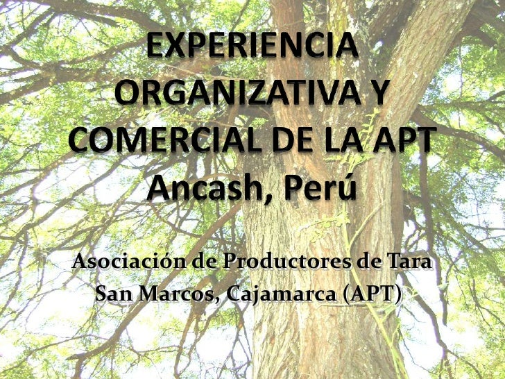 EXPERIENCIA ORGANIZATIVA Y COMERCIAL DE LA APTAncash, Perú<br />Asociación de Productores de Tara  <br />San Marcos, Cajam...