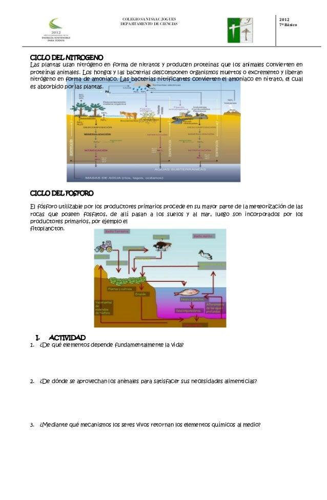 Taller ciclos biogeoquimicos 7°