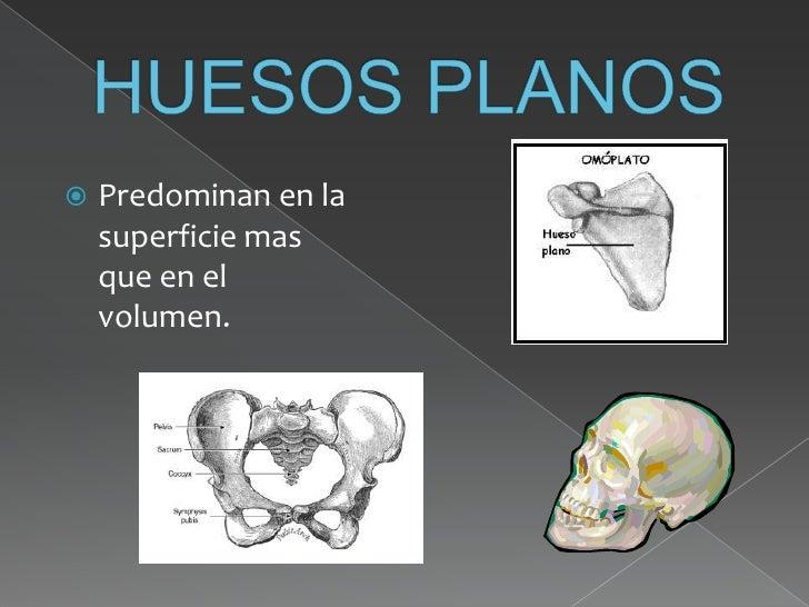 Taller De Anatomia