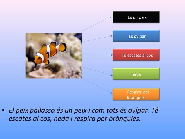 Es un peix  És ovípar  Té escates al cos  neda  Respira per brànquies  • El peix pallasso és un peix i com tots és ovípar....