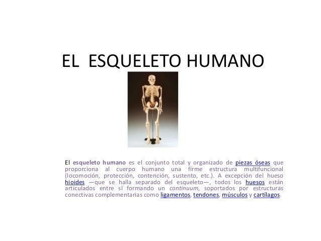 EL ESQUELETO HUMANOEl esqueleto humano es el conjunto total y organizado de piezas óseas queproporciona al cuerpo humano u...